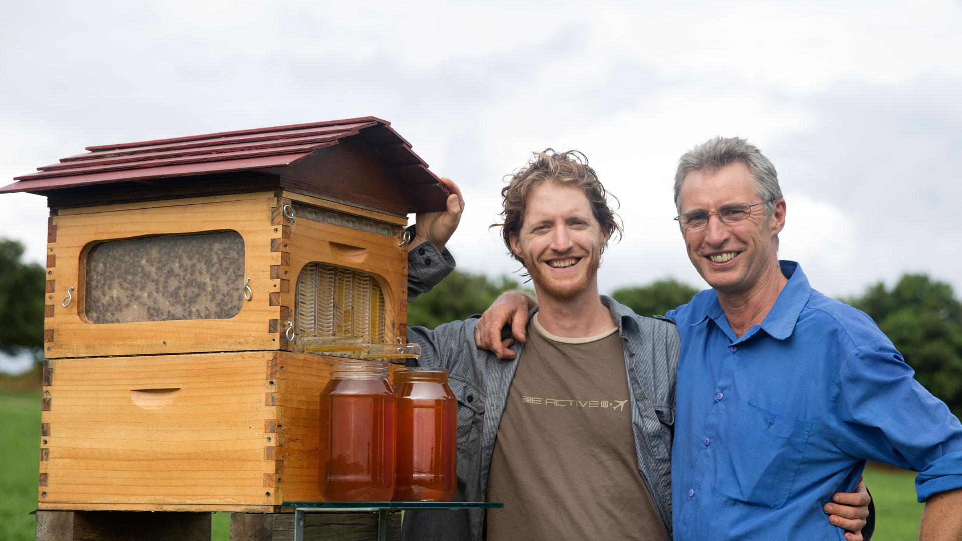 Nova caixa de abelha que extrai automaticamente o mel stylo urbano