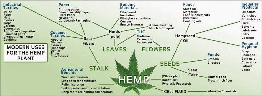 Conheça a história da cannabis sativa, a planta que tem mais de 25.000 utilidades stylo urbano-3