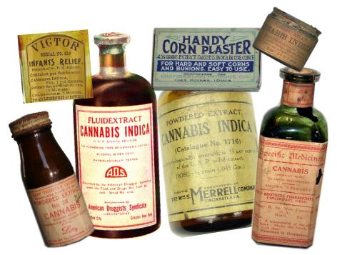 Conheça a história da cannabis sativa, a planta que tem mais de 25.000 utilidades stylo urbano-1