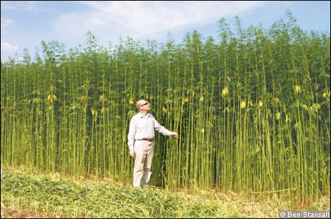 industrial-hemp-field-0126