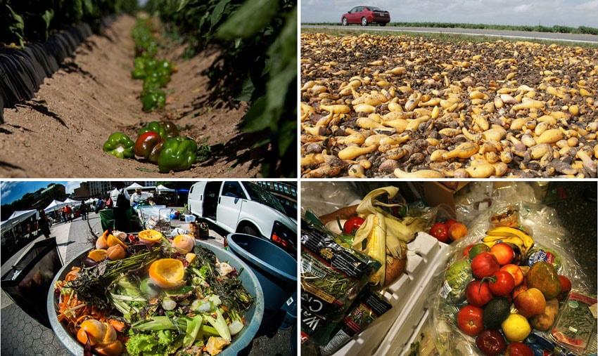 Metade de toda a comida produzida nos Estados Unidos é jogada no lixo stylo urbano