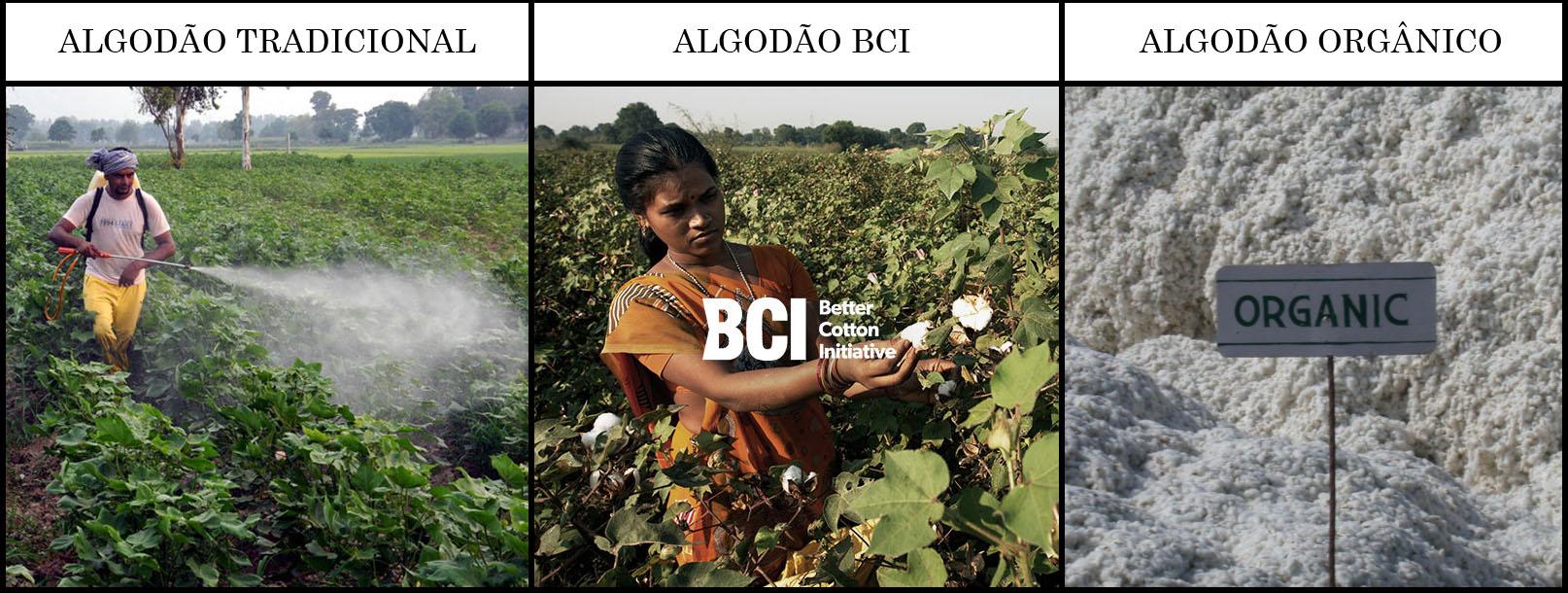 Monsanto perde milhões na Índia pois agricultores estão plantando algodão orgânico stylo urbano-1