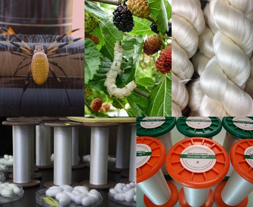 Kraig Biocraft produz seda de aranha através de bichos-da-seda geneticamente modificados stylo urbano