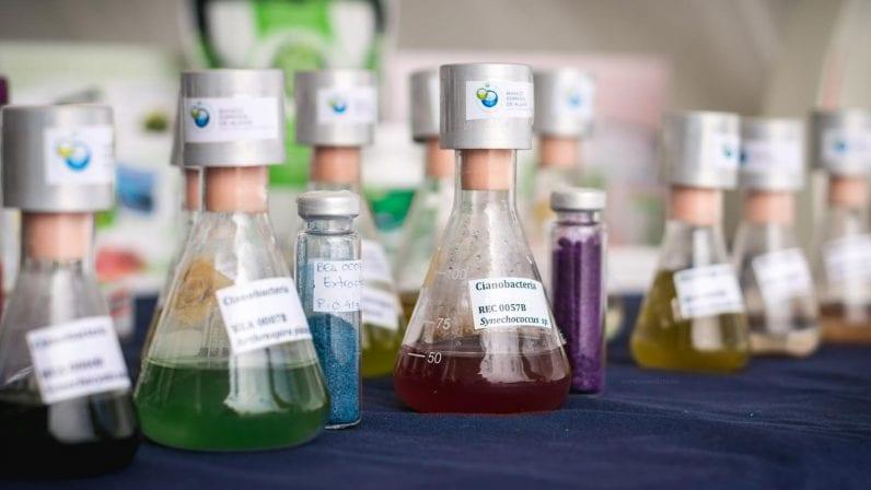 Novos corantes naturais feitos de algas e bactérias poderãosubstituir oscorantes sintéticos para tecidos stylo urbano-1