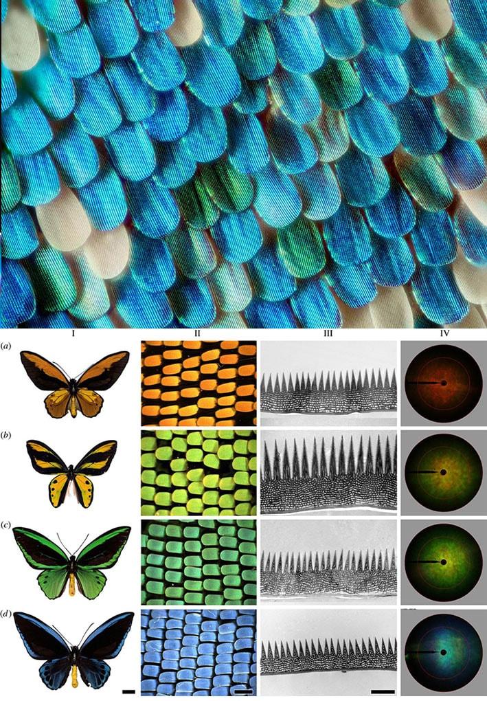 Cor estrutural, a nanotecnologia da natureza que poderá substituir os corantes e tingimento têxtil stylo urbano-1