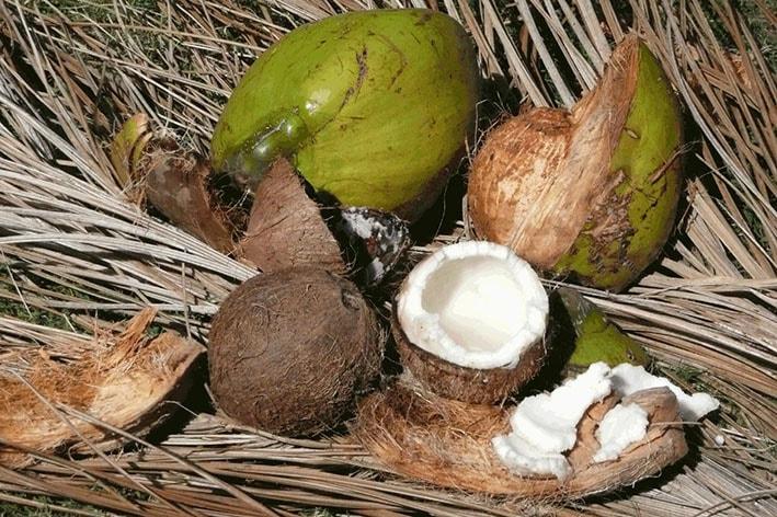 Pesquisadoras tailandesas transformam fibra de coco verde em tecidos funcionais stylo urbano-1