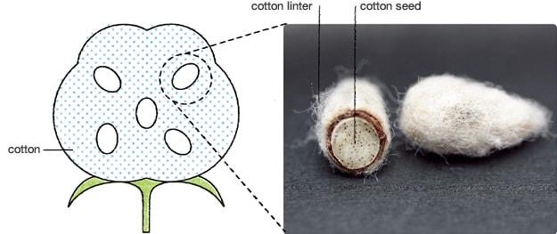 Naia e Bemberg : novas fibras celulósicas sustentáveis que aliam sofisticação e conforto stylo urbano-2