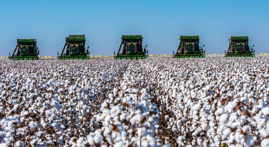O problema do algodão numa economia circular - Stylo Urbano